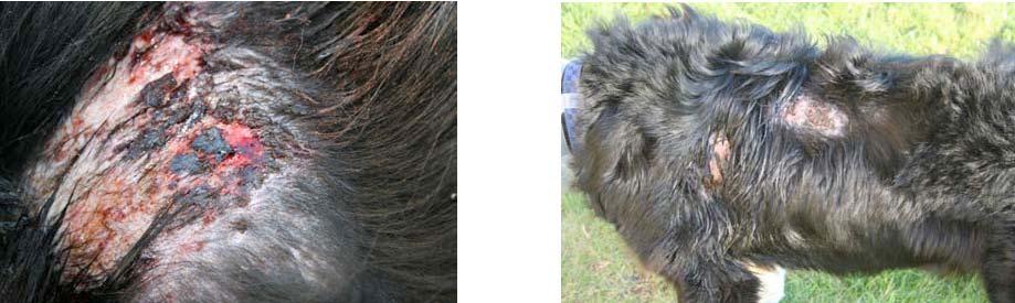 výsledky léčení psů biolampou